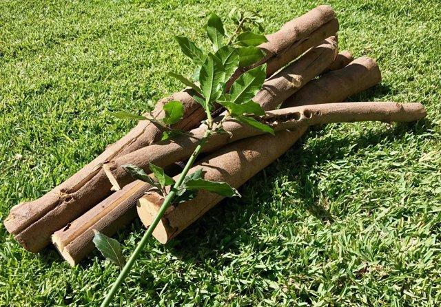 La madera de laurel impide las bacterias perjudiciales en alimentos