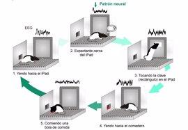 Un estudio identifica un patrón cerebral que activa pantallas táctiles