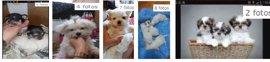 Denunciada una vecina de Burgos por criar y vender cachorros de perro a 500 euros sin autorización