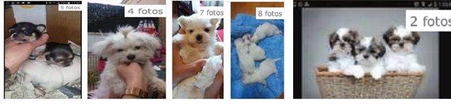 Burgos: anuncio de la venta de los cachorros