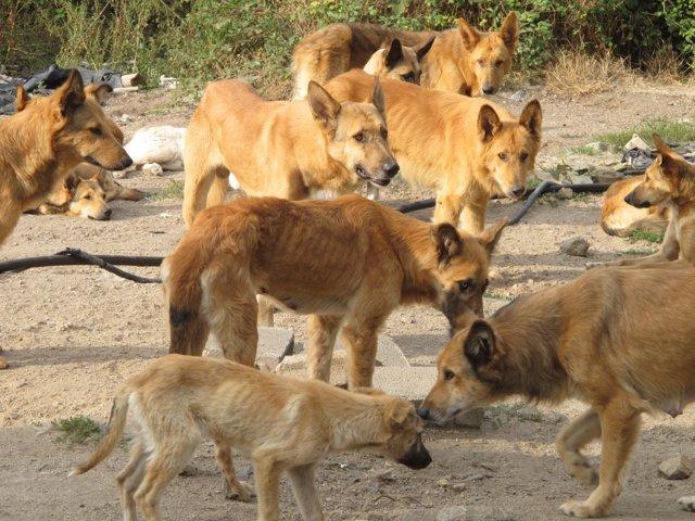Perros abandonados en Castroverde (Lugo)