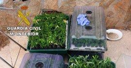 Detenida una persona e investigada otra por cultivar 1.318 plantas de marihuana en Pioz