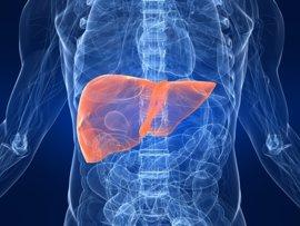 Consiguen invertir el mecanismo de la enfermedad del hígado graso