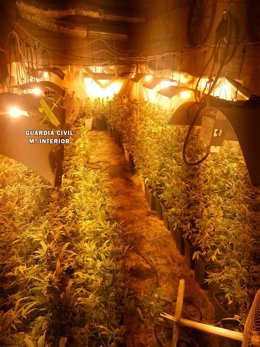 Marihuana indoor málaga velez