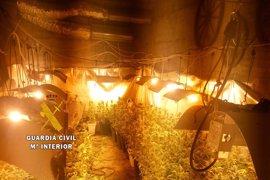 Sucesos.- Cae una organización criminal dedicada a cultivar marihuana en una nave agrícola en Benamocarra