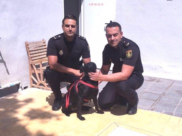 Policía detiene a un hombre en Fuengirola que intentó matar a su perro