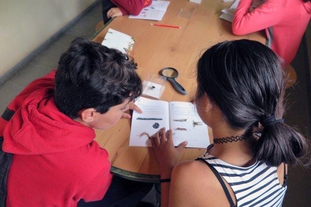 Alumnos madrileños investigan sobre los polinizadores