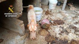 El PP quiere agravar las penas para las protectoras que maltraten de forma continuada a los animales