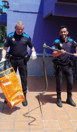 La Policía Local de Vigo atrapada una serpiente atrapada.