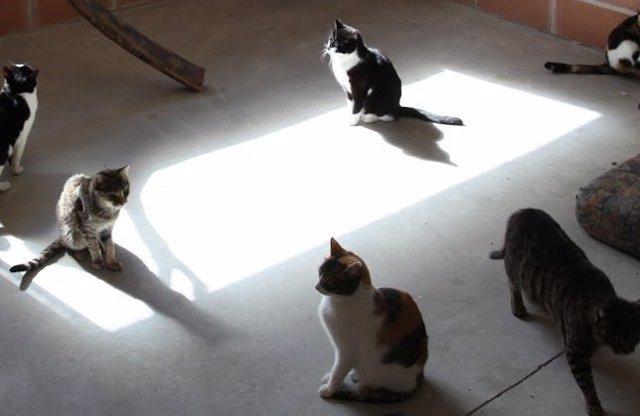 Comienza una recogida de firmas para pedir el control de las colonias de gatos
