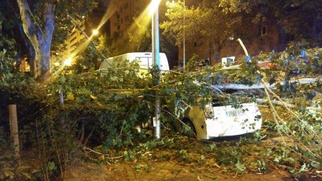 Un árbol ha caído sobre un taxi en Vallecas