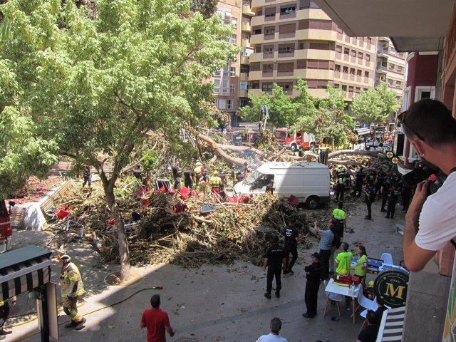 Imagen De Los Trabajos Para Retirar Las Ramas Del Ficus De Santo Domingo