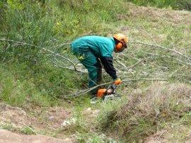 Endesa invierte 149.000 euros en limpiar las zonas boscosas cercanas a sus líneas de distribución de Menorca