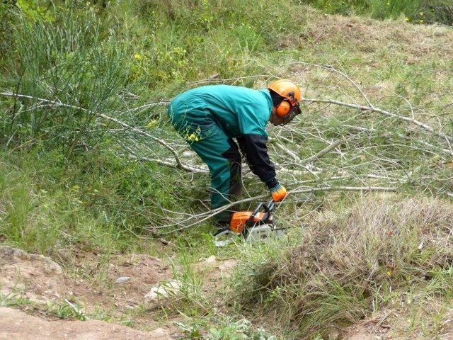 Limpieza de masa forestal
