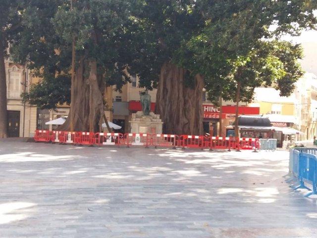 Ficus de la plaza de san Francisco