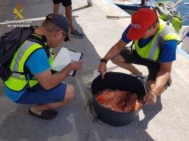 Incautan más de 100 kilos de pescado sin etiquetar en Alicante y la isla de Tabarca