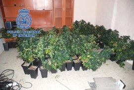 Detenido un hombre y desmantelada una plantación de marihuana en una vivienda abandonada de Jaén