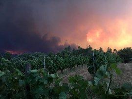 Aumenta a 62 el número de fallecidos por el incendio forestal de Leiria, 30 de ellos en sus vehículos