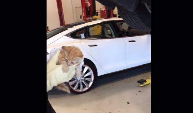 Gato atrapado y rescatado del parachoques trasero de un Tesla