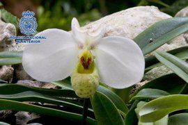 Detenido en Estepona por robar dos plantas expuestas en el orquideario valoradas en 500 euros cada una