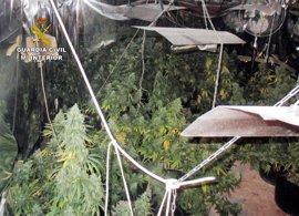 La Guardia Civil desmantela en Pliego una plantación 'indoor' de marihuana