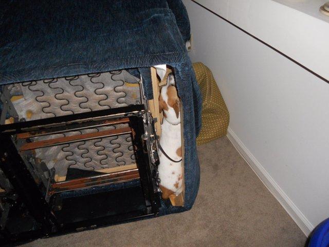 Perro escondido en el interior de un sofá