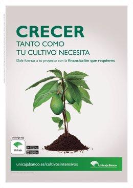 Unicaja Banco ofrece préstamos preconcedidos para cultivos intensivos.