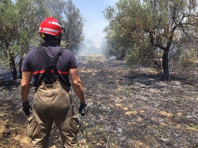 Incendio sofocado en Bormujos.