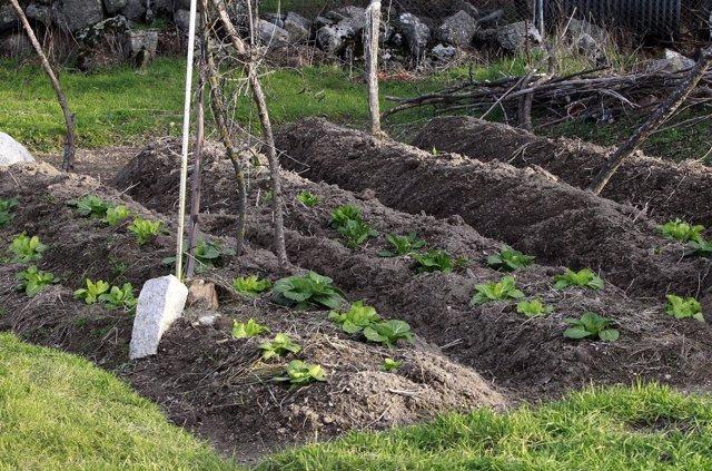 Agricultura, agricultor, agrícola, agrícolas, campo, campos, cultivos, cultivos