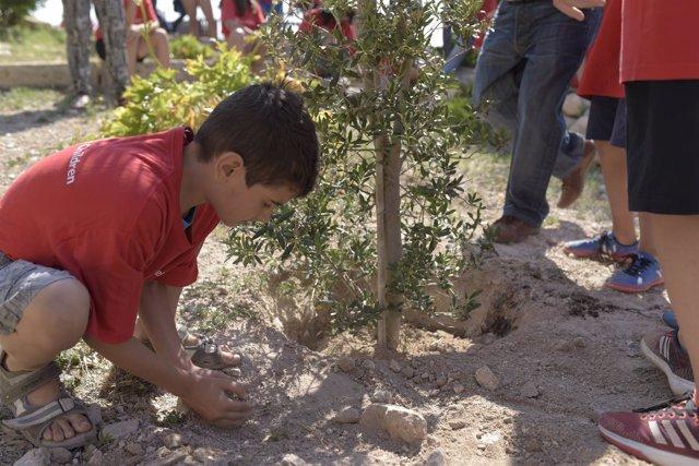 Alumnos de Primaria plantan un olivo en el acto de Save the Children