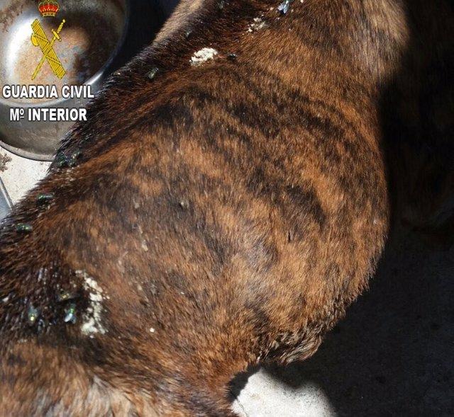 Detenida una pareja por maltrato de un perro que tuvo que ser sacrificado