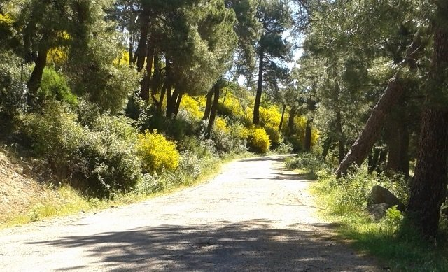 Pista forestal de Monte Abantos