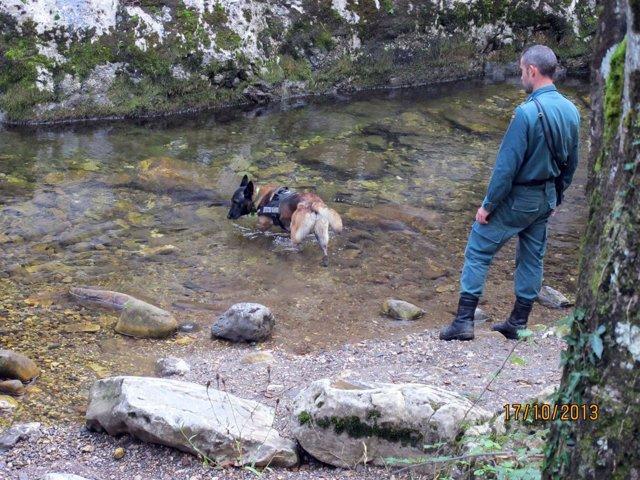 Perro buscando veneno