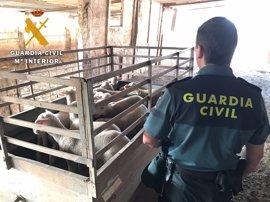 Detenidas en Córdoba 34 personas por presunto robo y comercio fraudulento de ganado ovino