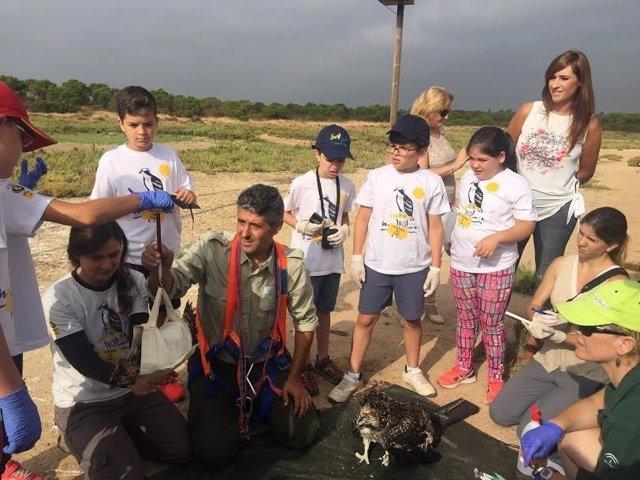 Alumnos asisten al anillamiento de águilas pescadoras en Huelva.