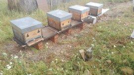 La Eurocámara respalda prohibir tres insecticidas peligrosos para las abejas