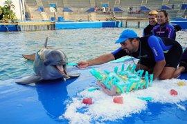 El delfín Neptuno celebra su 13 cumpleaños en el Oceanogràfic