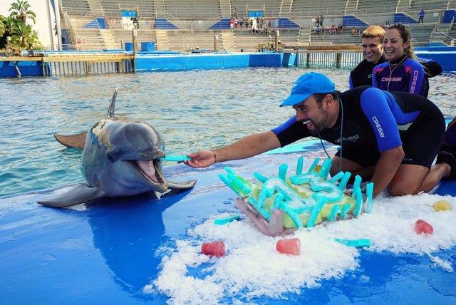 La primera cría de delfín nacida en el Oceanogràfic cumple 13 años