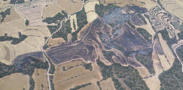 Superfície quemada en un incendio en Agramunt (Lleida)