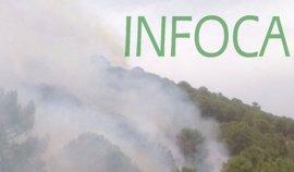 Estabilizado el incendio forestal declarado en Benahavís (Málaga)