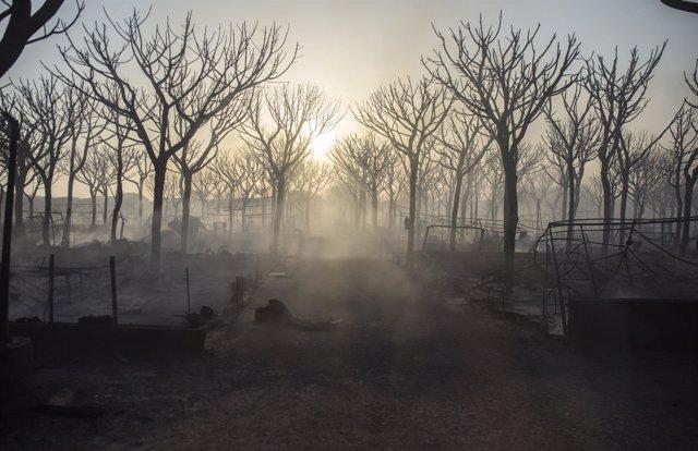Incendio forestal en Moguer (Huelva)