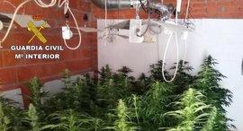 Detenida una persona e incautadas 42 plantas de marihuana en Villarrubia de los Ojos
