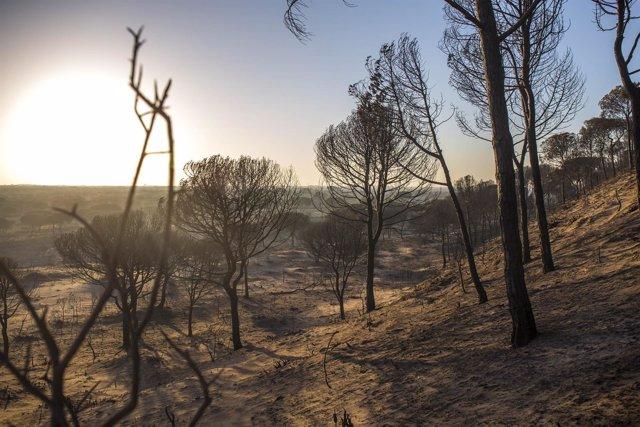 El incendio de Huelva ha quemado Cuesta Maneli
