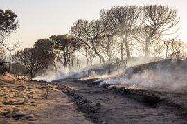 """Los dos focos del fuego de Doñana están perimetrados y su aspecto, """"incomparablemente mejor"""", según la Junta"""