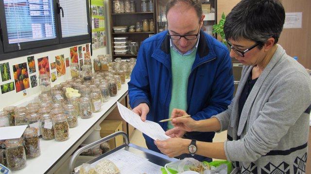 El CITA cuenta con 28 muestras de 'Garbanzos singulares de Aragón'