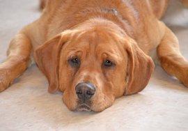 Rescatan a un perro con síntomas de deshidratación al estar encerrado en un vehículo en Santa Eulària