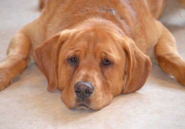 Eastwood, el único perro no adoptado de una perrera de 2500 perros
