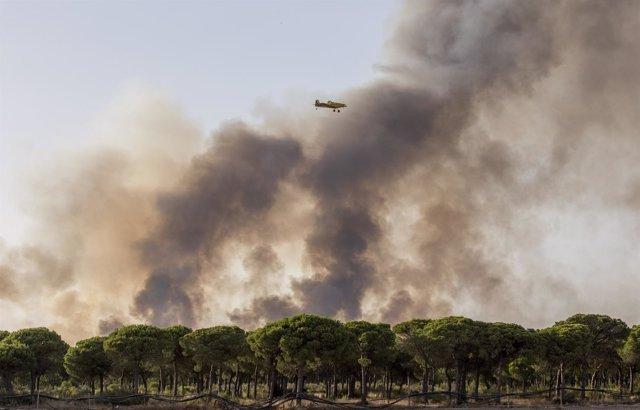 Imagen de este domingo del incendio declarado en Moguer (Huelva)