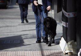 Aprobada la ley de acceso con perros de asistencia
