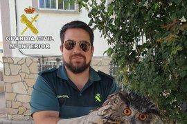 La Guardia Civil recupera un Búho Real en Sacecorbo (Guadalajara)